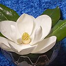 Magnolia on Blue by Cranston Reid