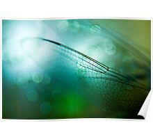Emerald Damselfly  Poster
