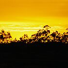 Sunset In The Gums by Felicity McLeod