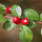 Red berries by RosiLorz