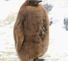 The King Penguin Chick by Aneurysm