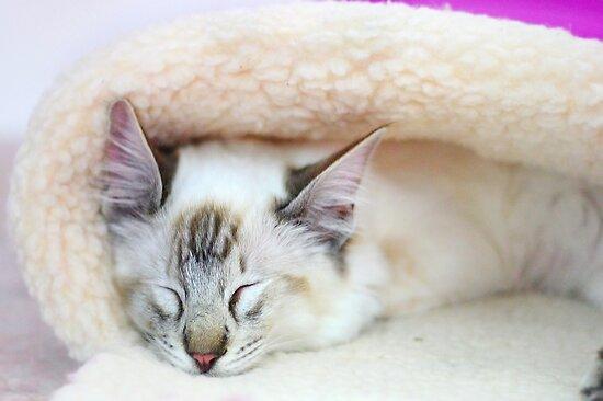 Sleeping Beauty by Kelvin  Wong