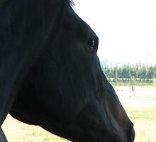 From the saddle by Karen Doidge