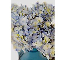 Hydrangeas Photographic Print
