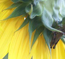 Sunflower & Grasshopper by Cassy Greenawalt