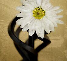 Daisy by Shelly Van Camp