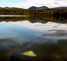 Otter Lake Alaska by Jenny Ryan