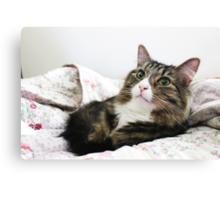 Cute Cat Renji Bed Time Canvas Print