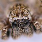 Spider by Pene Stevens