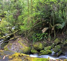 Taggerty River convergence- panorama by Vicki Moritz