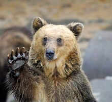 Brown bear by Aneurysm