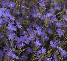Australian Wild Flowers #4 by Paul Gilbert