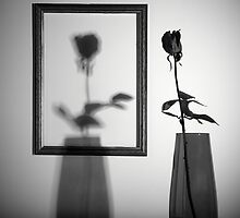 the rose in the frame by sergiodv