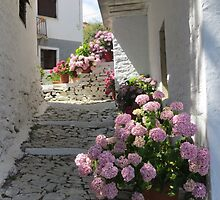 Flowers in an Alley by keddesign