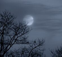 Moon Waltz by WildThingPhotos