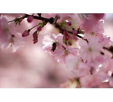 Blossom 3 Photographic Print