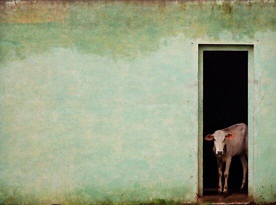 Cow by Biren Brahmbhatt