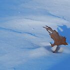 Frozen Leaf Shadows by WildThingPhotos