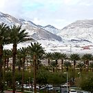 Palm Trees &amp; Snow in Las Vegas Nevada, USA by RichardKlos