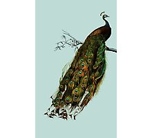 Lemme see your peacock Photographic Print