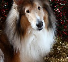 Merry Christmas from Bailey! by Jan  Wall