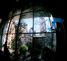 Vine View by Christine Corrigan