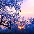 Blue Lonely Winter, Brannon Mt. NW Arkansas, USA by NatureGreeting Cards ©ccwri