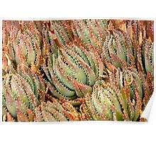 Cacti Cluster Poster