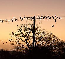 Batty Birdy by Anima Fotografie