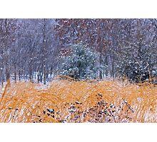 Winter Color Photographic Print