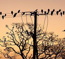 Hanging Around before Sunrise by Anima Fotografie