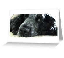Spaniels Eyes - Blue Roan Cocker Spaniel Greeting Card
