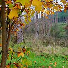 Autumn Leaves by Harry Oldmeadow