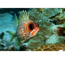Squirrel Fish Photographic Print