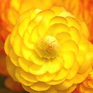 Mellow Yellow by harborhouse55