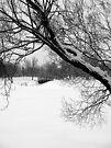 Winter Park Scene by Leanna Lomanski