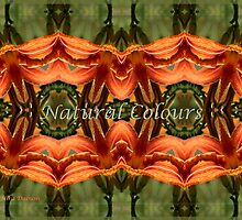 Natural colours by Nira Dabush