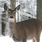 Woodland Doe by Vicki Oseland