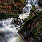 Myrtle Gully Falls by Anthony Davey