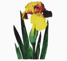 One Yellow Iris by Susan Savad