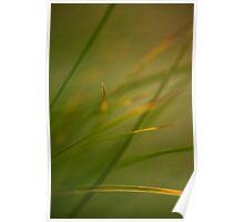 Silken Grass Poster