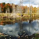 Beaver Pond in Gatineau Park by Max Buchheit
