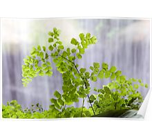 Fern and fall Poster