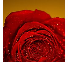 Red Rose macro Photographic Print