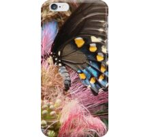 Pipevine Swallowtail Butterfly in Mimosa's Silky Blossoms iPhone Case/Skin