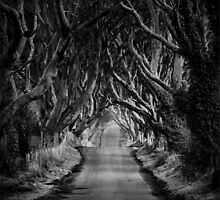 The Dark Hedges by Phil Newberry