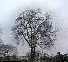 Bare Trees revisited by blamo