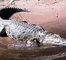 Crocodile Tears by Braedene