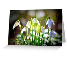 """ Snowdrops In Spring "" Greeting Card"