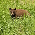 Black Bear by erbephoto